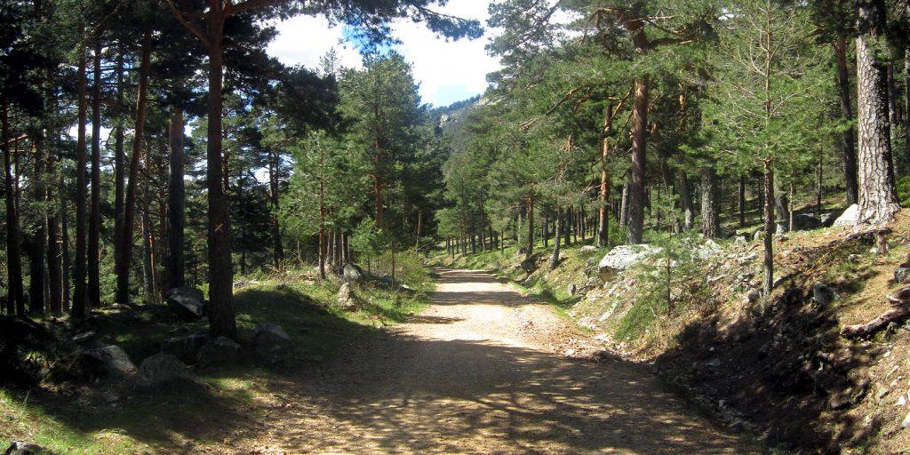 Pista forestal del valle de la Barranca