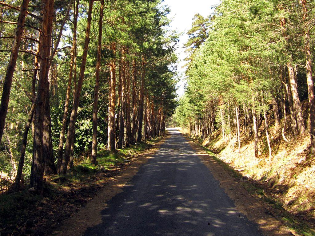 Pista asfaltada de la explotación maderera de los Pinares de Valsaín