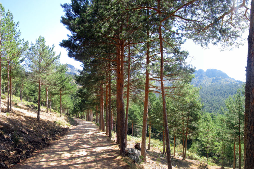 Navacerrada - La Barranca - Camino de la tubería