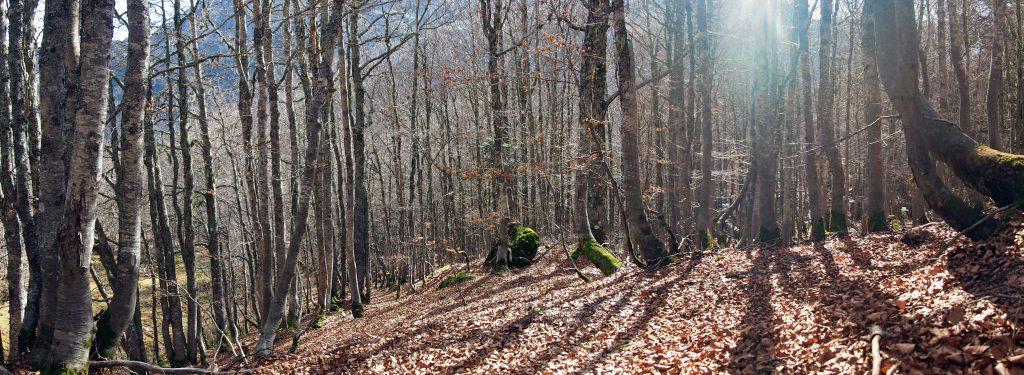 Bosque de Ayous